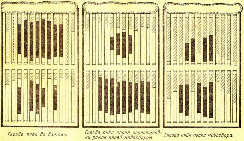 Схема размещения рамок в двухкорпусном улье перед главным взятком (условные обозначения те же, что и на рис. 153).