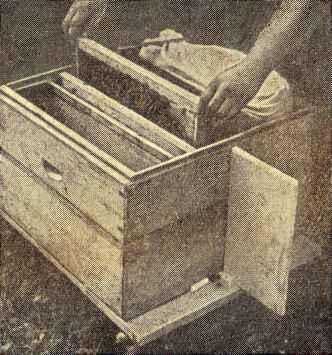 Повторное использование семьи-воспитательницы пчел-Пчелка - медовые рецепты